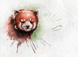 Red Panda by AVindas