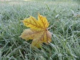 Yellow Leaf Frost VIII by TabiKittie