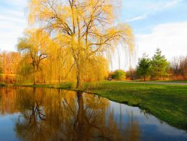 The Pond by Michies-Photographyy