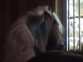 Through the window by Pepperspony