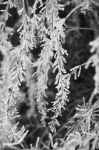 New Year frost by Larimara