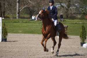 Chestnut Horse - Show Jumping stock - 11.14 by MagicLecktra