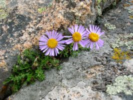From Rocks Come Flowers by mariposa116