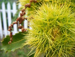 Chestnut Spikes by Seattle-Storm