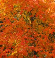 Stock: Fall Foliage Leaves I by Stock-By-Michelle