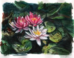 water lilies by CassandraJames