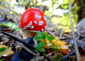 Toadstools #5 by Aroha-Photography