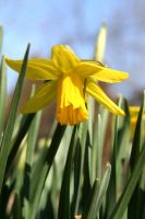 Sunny Spring 1 by WalnutHill
