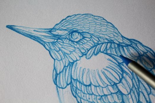 Common kingfisher - blue pencil by CathM