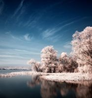 Color IR by DTokar