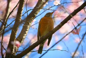 Spring Bird by vnt87