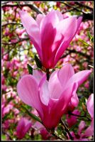 Graceful motion by scarify11