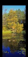 A small pond with ducks by Comane