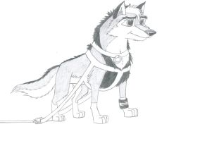 Kitara the wolfhound as a sled dog. 4 by MortenEng21