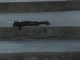 This heat is even effecting the squirrels by beachtownkid