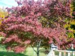 Fall Dogwood by wdcarty