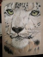 snow leopard- pastel by xx-ashley
