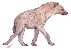 Spotted Hyena by Korrok