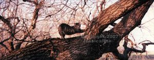 Tiger's Tree by jessicarae24