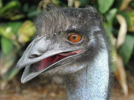 Emo Emu by cannedhubris
