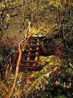 HDR forest stairs by teditooo-hr