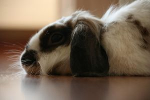 Relaxing by RaquellAndriessen