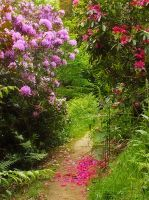 Petaled Path by pinkal00