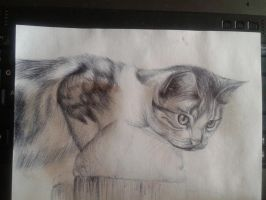Tabby Kitten with Watercolour by emmy1320