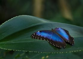 Butterfly Stock 06 by NellyGraceNG