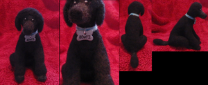 Felted Poodle by DancingVulture
