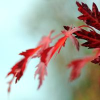 explosion of red by MorkOrk