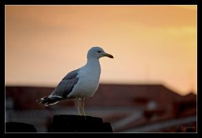 Venezia seagull 2 by blinka