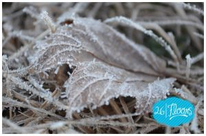 Morning Frost II by lotsosmiles85