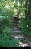 Woodland Stairs FREE Stock by KYghost