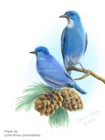 EA Project 3: Pinyon Jay by meihua