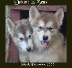 Dakota and Zeus by Arcticlightning
