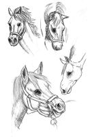 Horse Sketches by AriellaMay