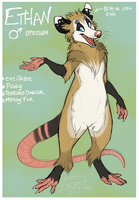 Ethan the opossum by Krysiilys