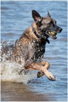 Splash Dog by KonikPolski