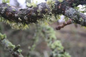 Hang-y Moss on Tree by DaggarHeart