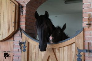 Friesian mare with BP foal by goldenboo