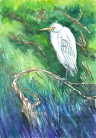 Chinese Egret by Carcaneloce