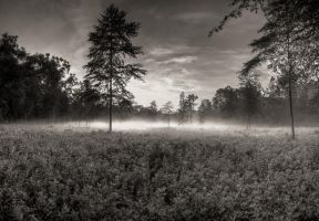 Foggy Glade, Early Morning by Bawwomick