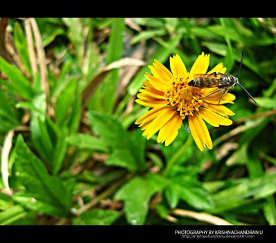 : Fly : by krishnachandranu