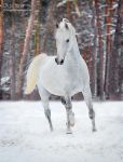 winter beauty by Olga5