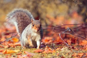 looking for nuts? by muileata