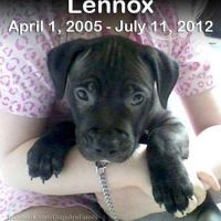 Rest in Peace Lennox by Miu-Misha