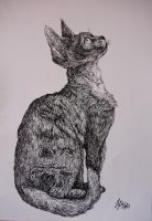 Devon Rex by MisiasArt