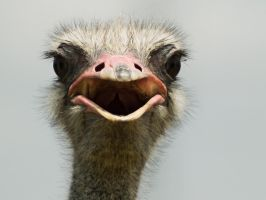 Ostrich by mojomagmajo