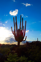 sAGUARO aT dUSK by Mirrormere